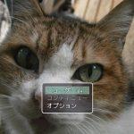 猫クイズの紹介とプレイ感想
